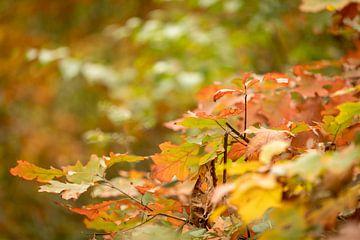 Herfstbladeren van Rik Brussel