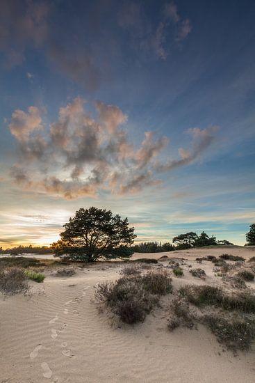 Duinen in het Drents-Friese Wold