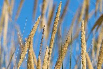 Dünengräser von Kirsten Warner