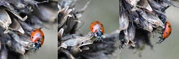 Drieluik, Collage Lieveheersbeestje van Gonnie van Hove