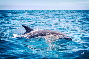 Gewone Dolfijn - Delphinus Delphis van Jacqueline Lemmens