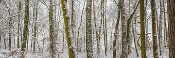 Winterbos van Walter G. Allgöwer