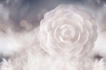 Camellia sur