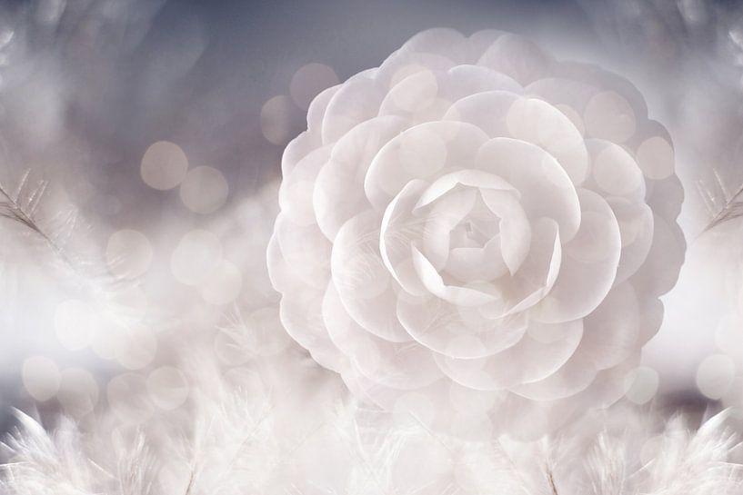 Camellia van Jacky Gerritsen