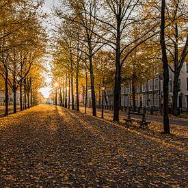Den Haag - Lange Voorhout van Tom Roeleveld