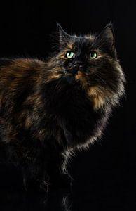 Portret van een kat. van