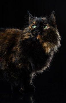 Portret van een kat. von Hennnie Keeris