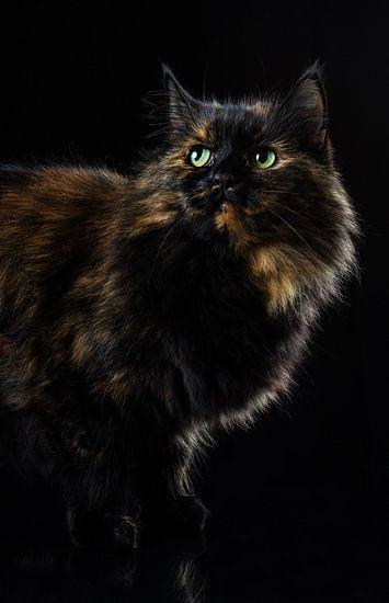 Portret van een kat.