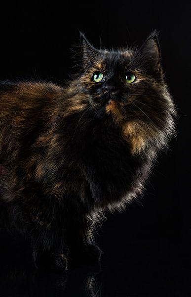 Portret van een kat. van Hennnie Keeris