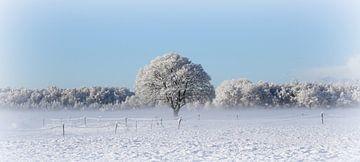 Witte wereld von Hanneke de Vries-Koning