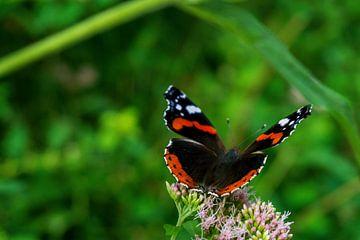 Schmetterlingsflug von Lilisphotography