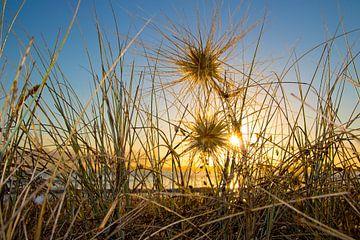 Strand en duinen bij zonsopkomst van