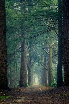 Portal through the forest von Mark Vredeveld