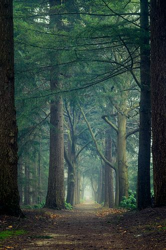 Portal through the forest