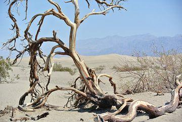 Death Valley van Monique ter Keurs