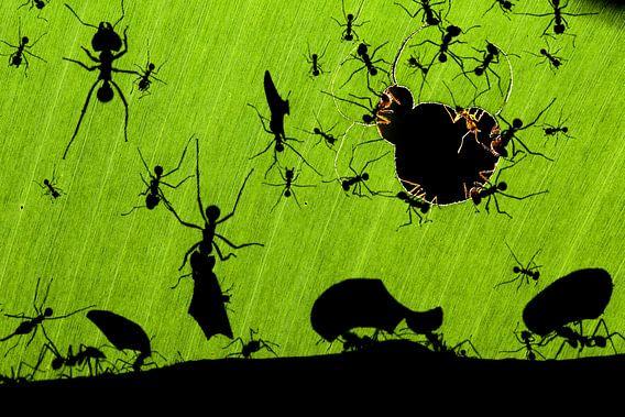Bladmieren in actie door Bence Mate van AGAMI Photo Agency