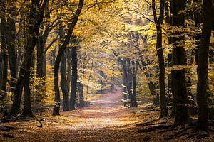 Bospaden en herfstkleuren