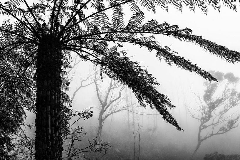 Regenwoud in de mist V van Ines van Megen-Thijssen