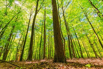Ich sehe den Wald nicht mehr durch die Bäume. von Sander Meertins