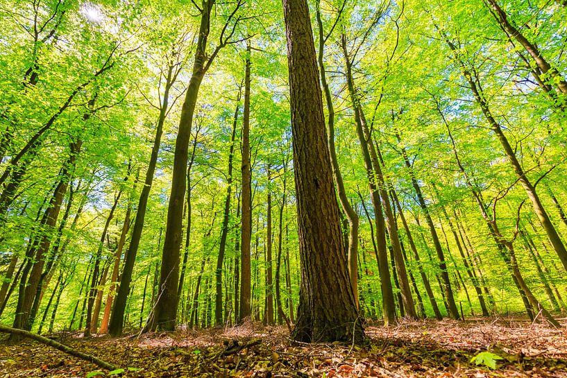 Door de bomen het bos niet meer zien van Sander Meertins