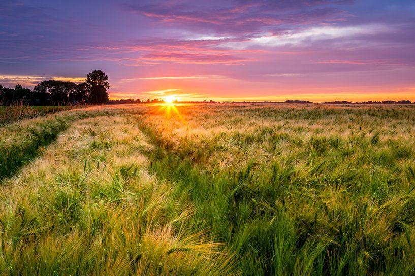 Zonsondergang boven een gerst veld van Ellen van den Doel