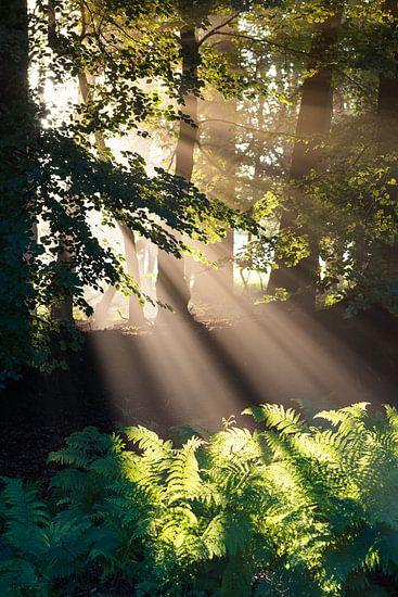 Goddelijke Zonnestralen I