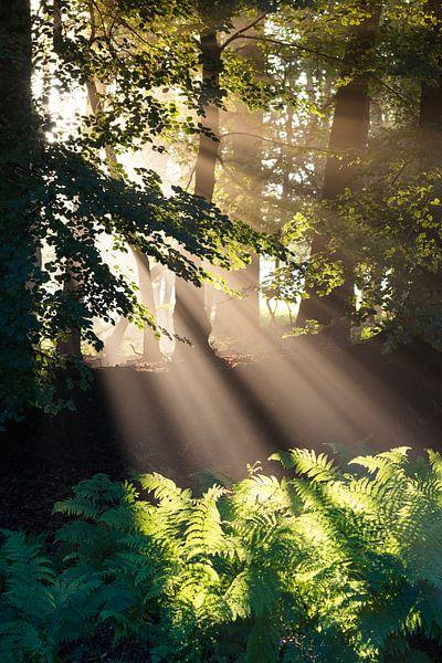 Goddelijke Zonnestralen I van Thijs van den Broek