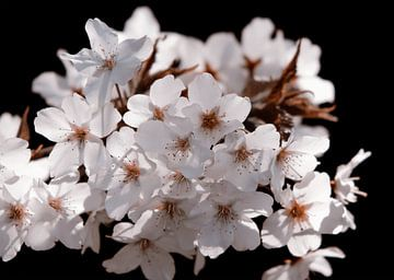 Strahlende Blüten von Nannie van der Wal