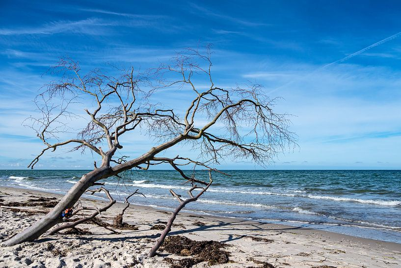 Baumstamm am Weststrand auf dem Fischland-Darß von Rico Ködder