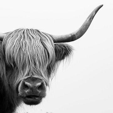 Schottische Highlander in Schwarz-Weiß von Affect Fotografie