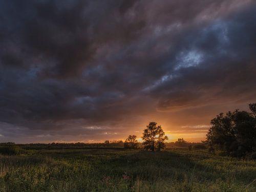 Als de avond valt in de Biesbosch