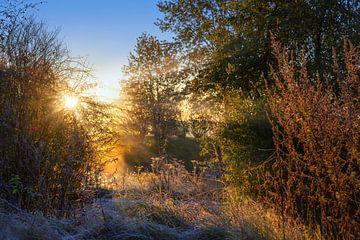 Sonnenaufgang auf dem Land in einer natürlichen Landschaft an einem kalten Herbstmorgen von Maren Winter