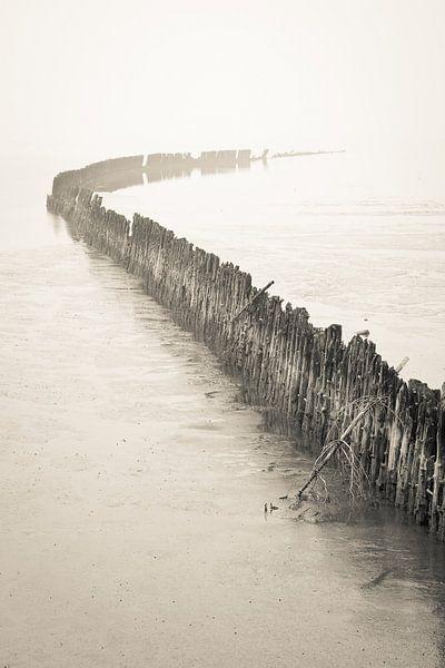 Zeekering in de mist