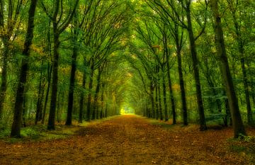 Groene tunnel van Pascal Raymond Dorland