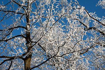 winter wonderland von Nico van Remmerden