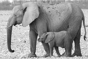 Elefant mit Kalb von Petervanderlecq