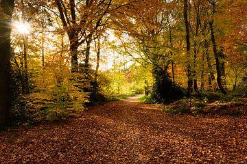 Bronzewälder in Limburg von Peter van den Bosch