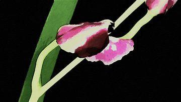 Eröffnung Orchidee - Malerei von Schildersatelier van der Ven