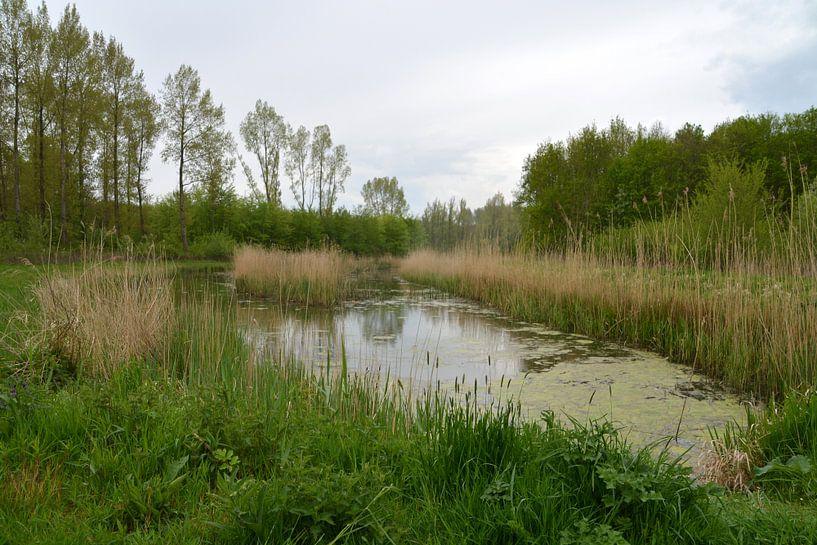 Ven in Dordtse Biesbosch van FotoGraaG Hanneke
