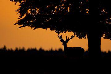Hirsche bei Sonnenuntergang von Berdien van Drogen