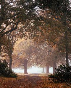 Mistige bomenlaan van Jeroen Brasz
