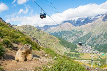 Alpenmurmeltier mit im Hintergrund Saas Fee und die Seilbahn von Elles Rijsdijk