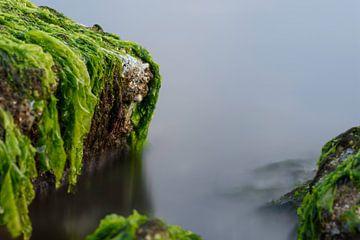 Zeewier groen 7 von Albert Wester Terschelling Photography