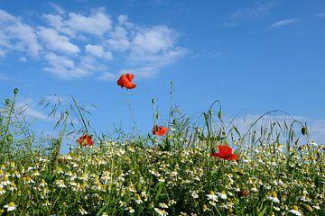 Feldblumen van Ostsee Bilder