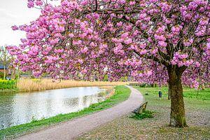 Lente in Grave van Jan Hoekstra