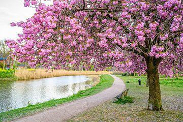 Frühling im Grave, NL von Jan Hoekstra