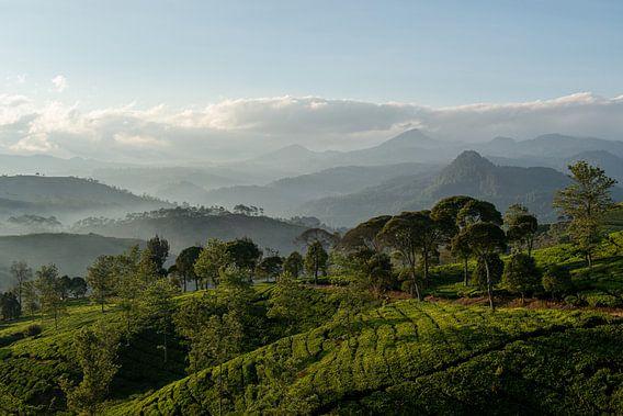 Theeplantage Indonesië