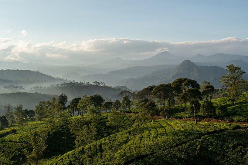Theeplantage Indonesië van Ellis Peeters