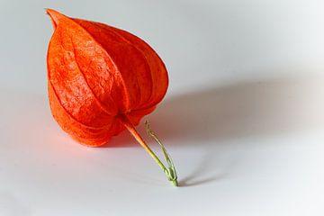 Der rote Lampion von Dieter Ludorf