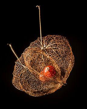 Boîte à graines d'une plante lanterne (Physalis) sur un miroir à fond noir sur Harrie Muis